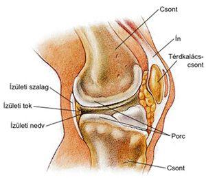 a vállízület fájdalmának oka kezelés myalgia arthrosis