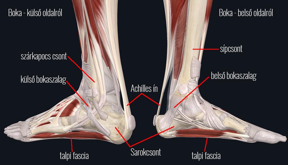 Achilles-ín fájdalma nemcsak kezelésére