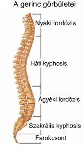 ágyéki lordosis kiegyenesedett csípőfájás térdhosszabbításkor