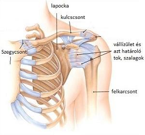 kenőcs viprosal nyaki osteochondrozzal a csípőízületek fájdalmának diagnosztizálása