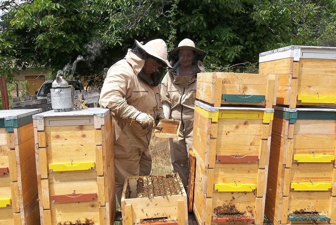 méhészeti kezelés ízületi fájdalom az emelőemelőkben
