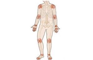 Kutya emésztőrendszer anatómiája. A kutya fő belső szervei A tüdő kutya anatómiája