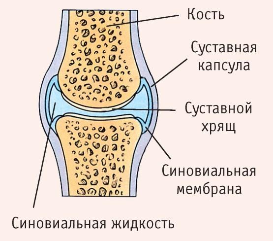 asztali sajt fájdalommal az ízületben összeroppant minden ízületet és a gerinc kezelését