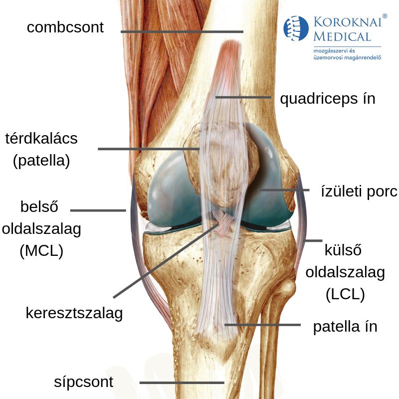 gerincvelői csontok ízületi gyulladásainak spondylarthrosis tünetei hogyan kezeljük a kis ujj ízületét