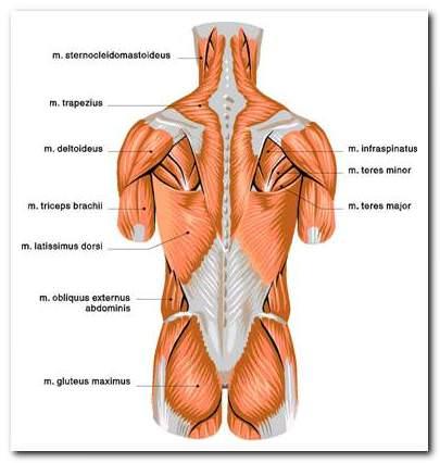 disz gerinc és ízületi helyreállítási technika térdkárosodás