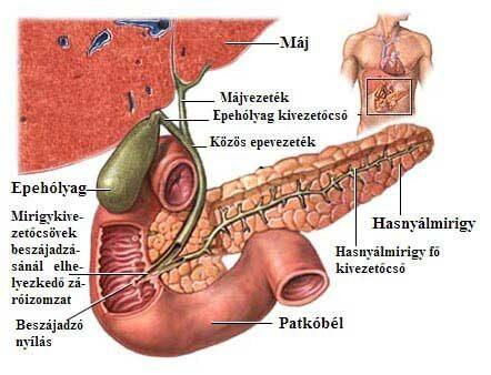 epeízületi fájdalom gyógyszere