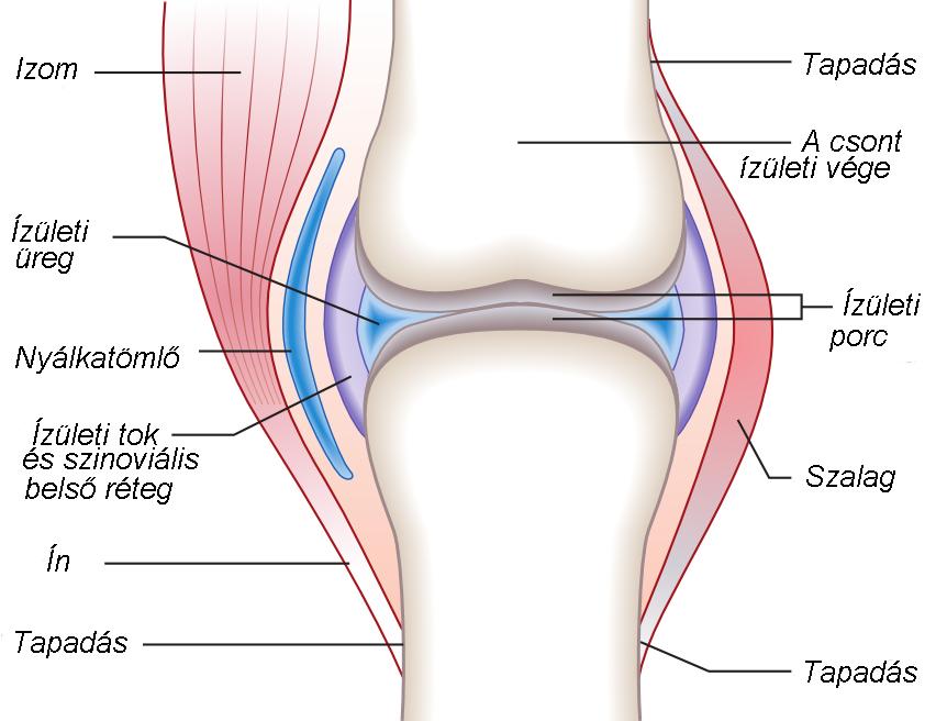 nagy ízületek deformáló artrózisa