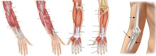 áttekintés az artrózis kezeléséről ízületi betegségek kezelésének modern módszerei