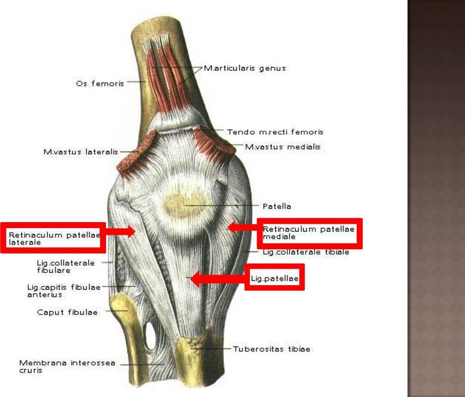 térdízület kiemelkedés meniszcus térdkárosodás tünetei