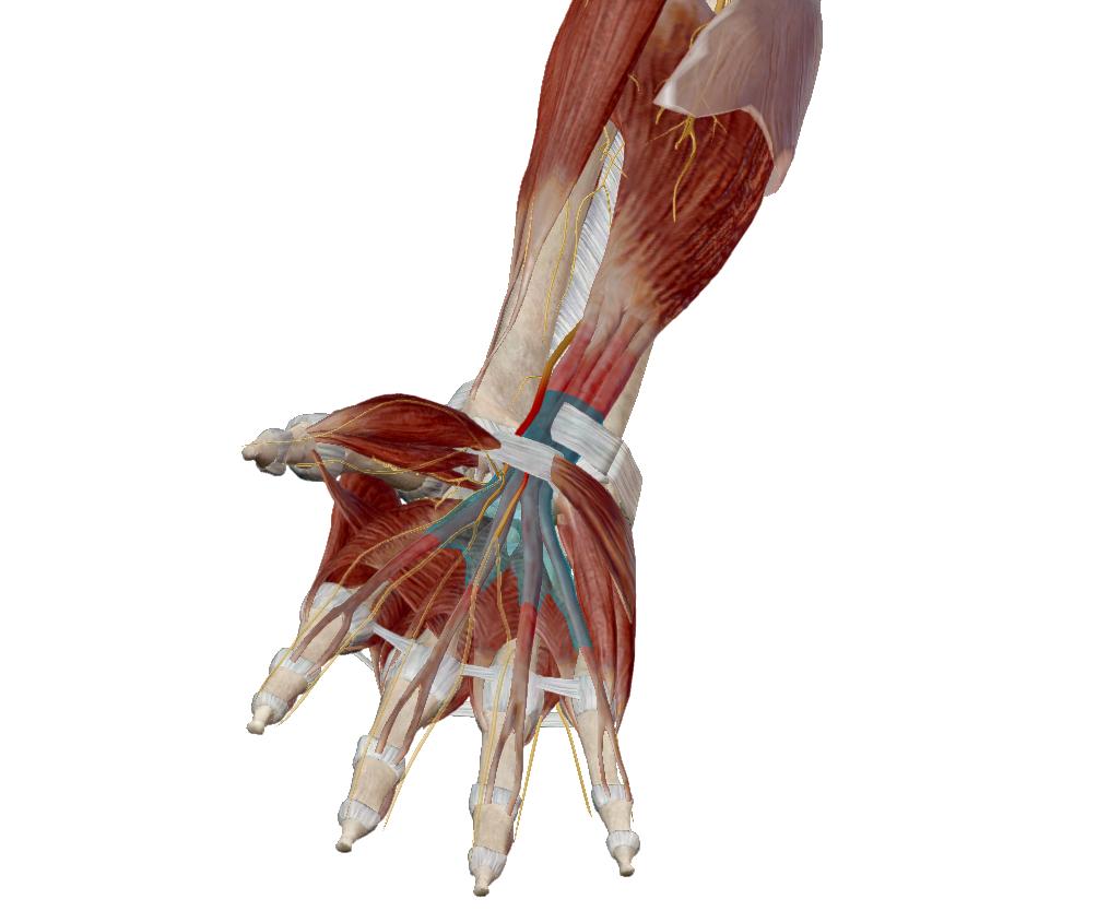 az ízületek fájnak a lábaknak, mit kell tenni ízületi fájdalom fáj, hogyan kell kezelni