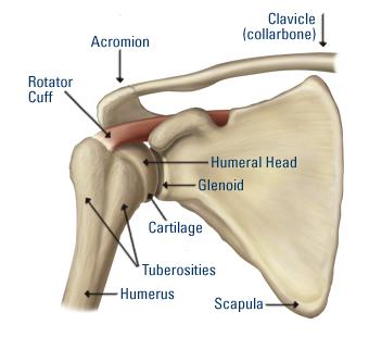 leggyakoribb vállsérülések hogyan lehet kezelni a rheumatoid arthritis ízületeket