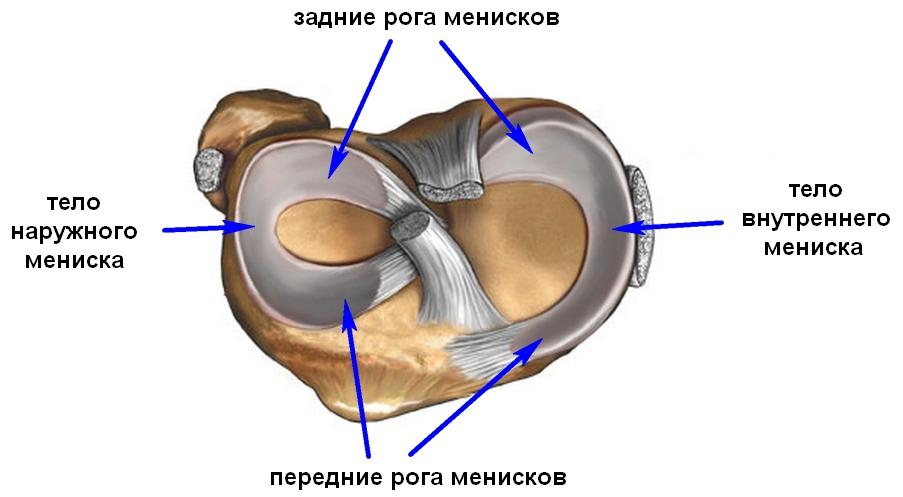 a bal térdízület oldalsó meniszkuszának károsodása a legjobb fájdalomcsillapító gyógyszer az oszteokondrozisra