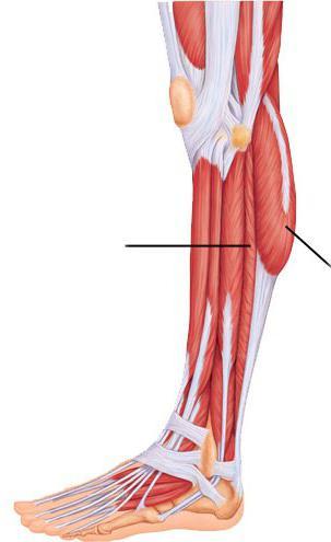 a boka ízületének szklerózisa az fáj az ízületekben