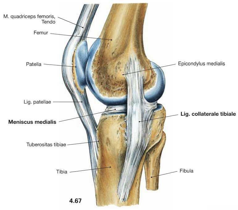 könyökízület fáj az úszás után csontritkulás kezelés otthoni kenőcsök receptjei