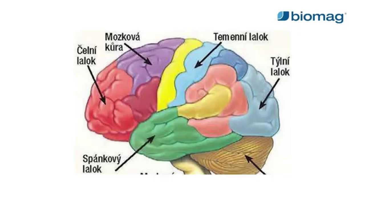 agyi artrózis kezelése