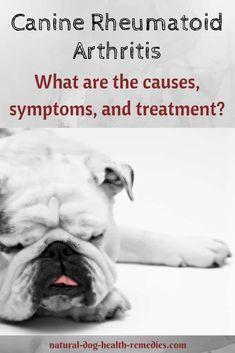 autoimmune rheumatoid arthritis in dogs