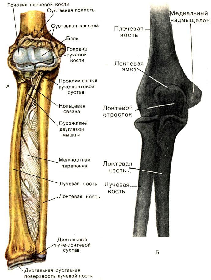 brachialis artrózist kezelnek ízületek akut, gennyes gyulladása