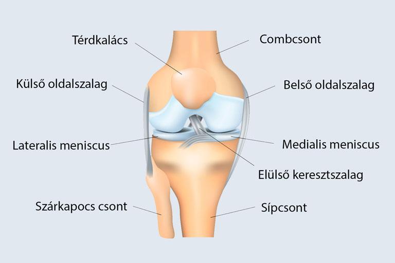 Térdizületi csúszóporc (Meniscus) sérülés, szakadás   Dr. Gergely Zsolt