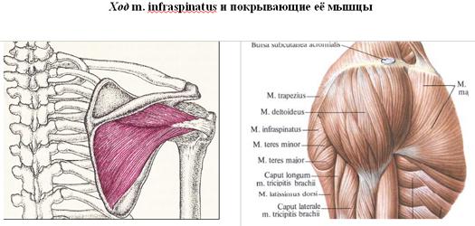 Hogyan támad az artrózis?