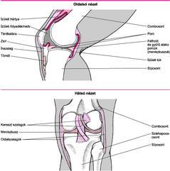 csontok és ízületek sérülései