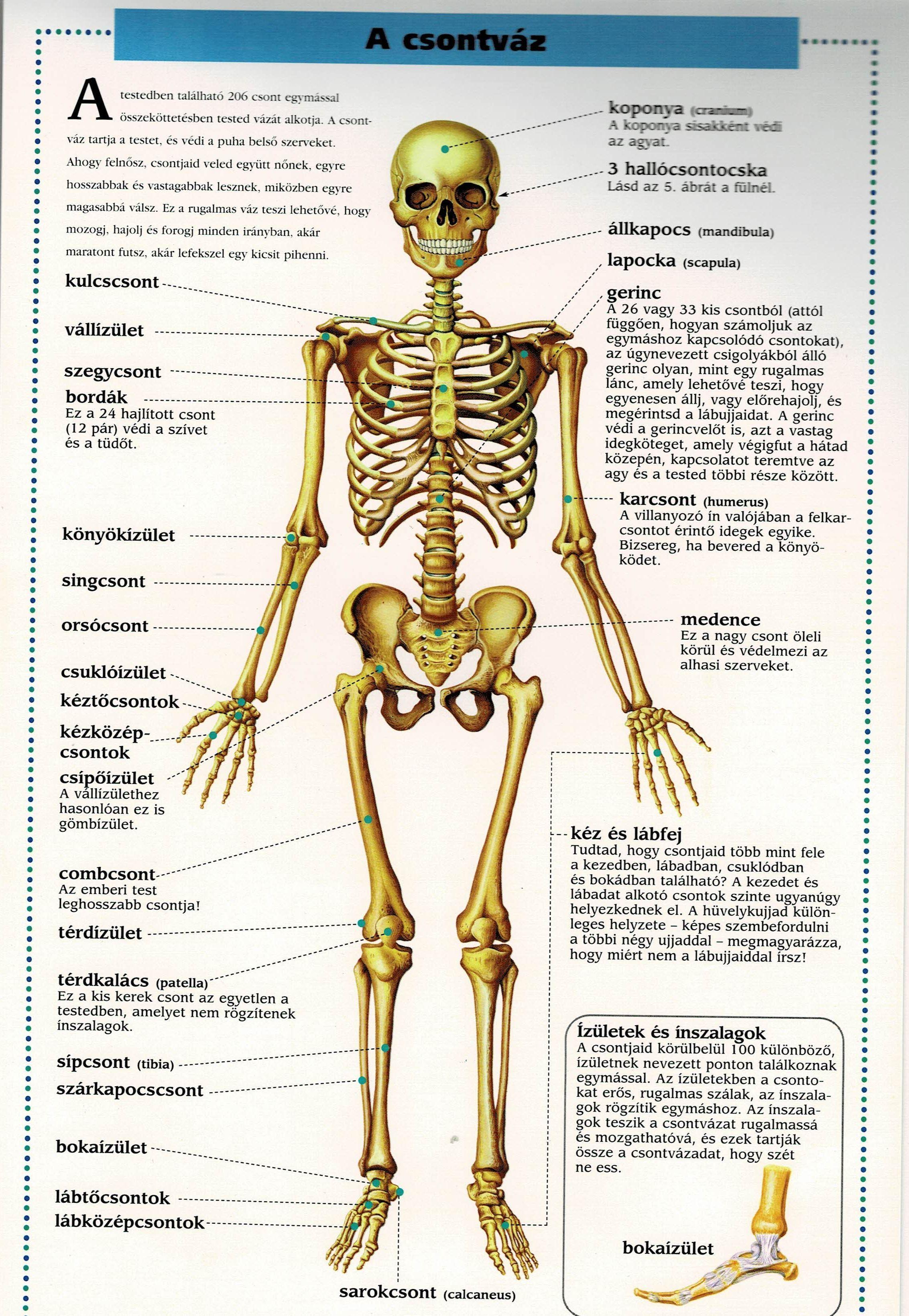 torna a térdízület fájdalmáról a láb ízületeinek gyulladásos betegségei