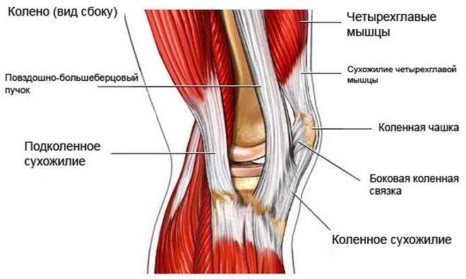 serdülők térdízületeinek betegségei a bokaízület deformációja artrózissal