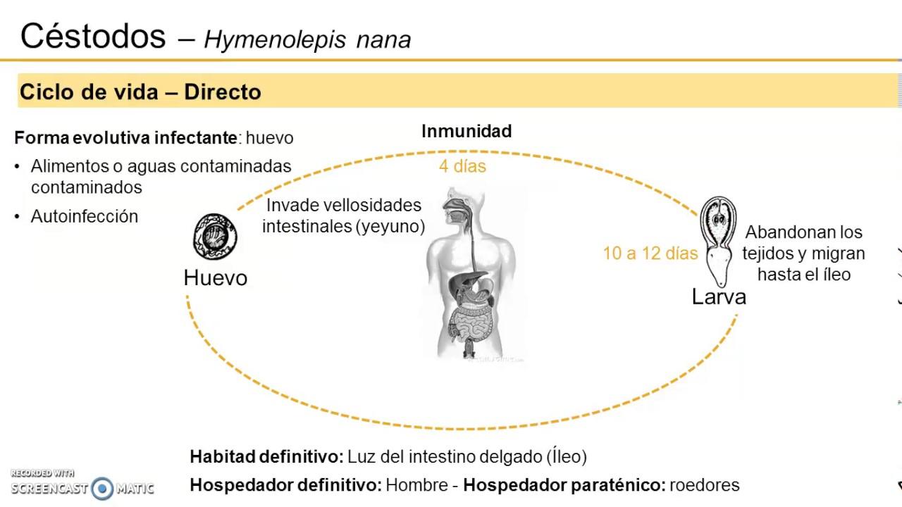 Arkocaps Harpadol ízületi gondokra kapszula (90 db) - egészs