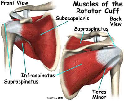 fájdalom a vállízület forgása során váll sérülés okai