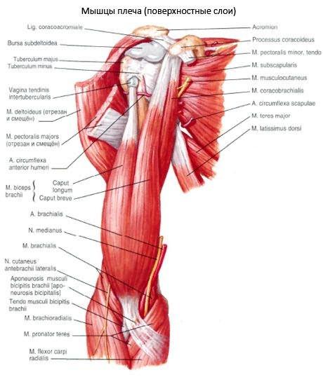 gyógyszer a térdre fáj a bal láb ízülete