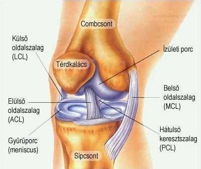 hogyan lehet legyőzni a térd artrózisát