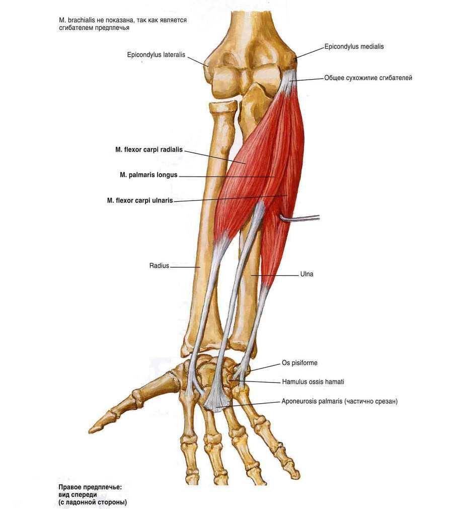 lehet futtatni a csípőízület artrózisával