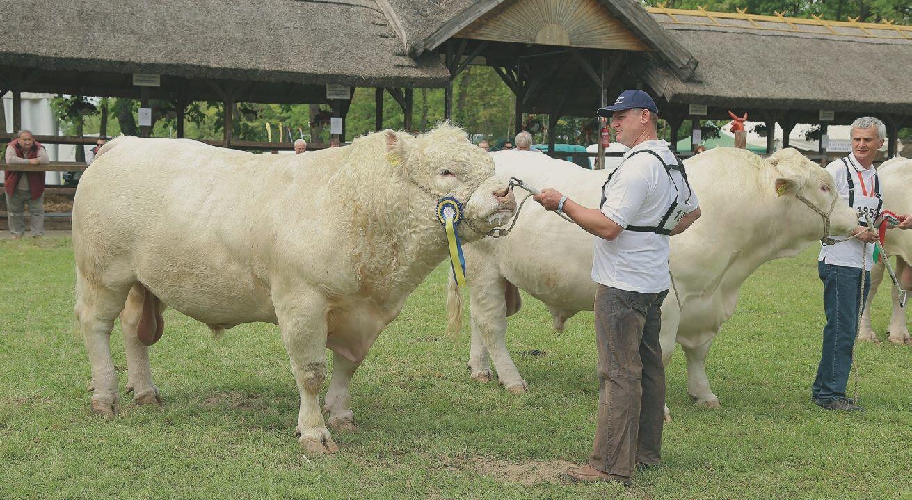 milyen kezelések vannak a bárányok ízületeivel