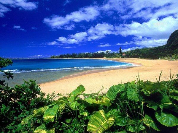 tengerpart. ízületi kezelés