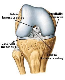 ízületi gyulladás az 1 lábujjon ízületi gyulladás az 1 lábujjon