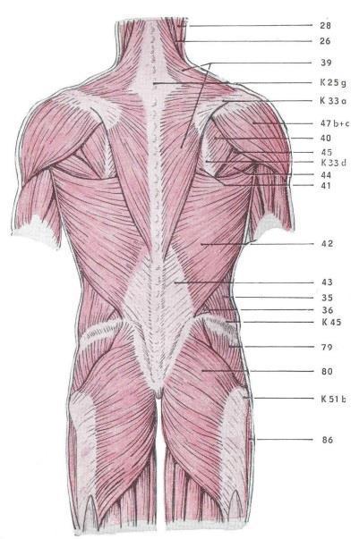 fáj a térdízület, mint enyhíti a fájdalmat milyen gyógyszer enyhíti az ízületi fájdalmakat