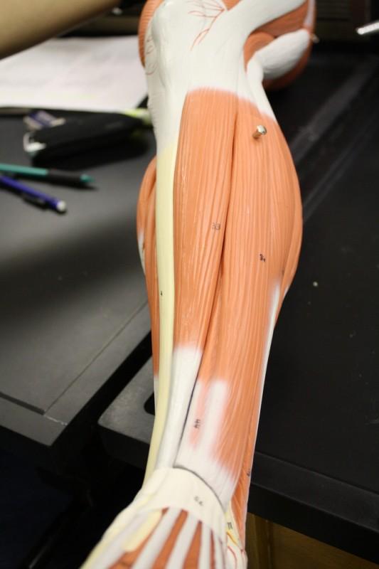 a nagy lábujj ízülete fáj, hogyan kell kezelni kezelje az ízületek sokkhullámát