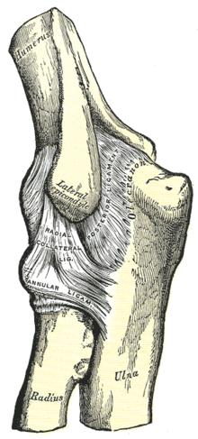 bal könyök fájdalom a térd artrózisának kezelésére vonatkozó előírások