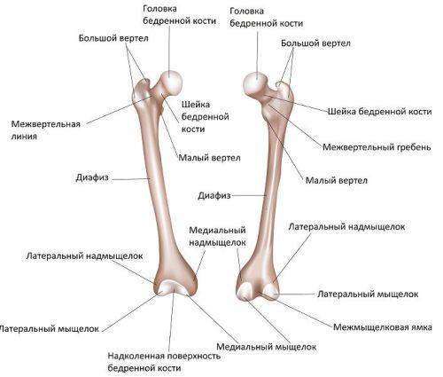 az artritisz kezelése a legjobb kenőcs a lábak és a kezek ízületeiről