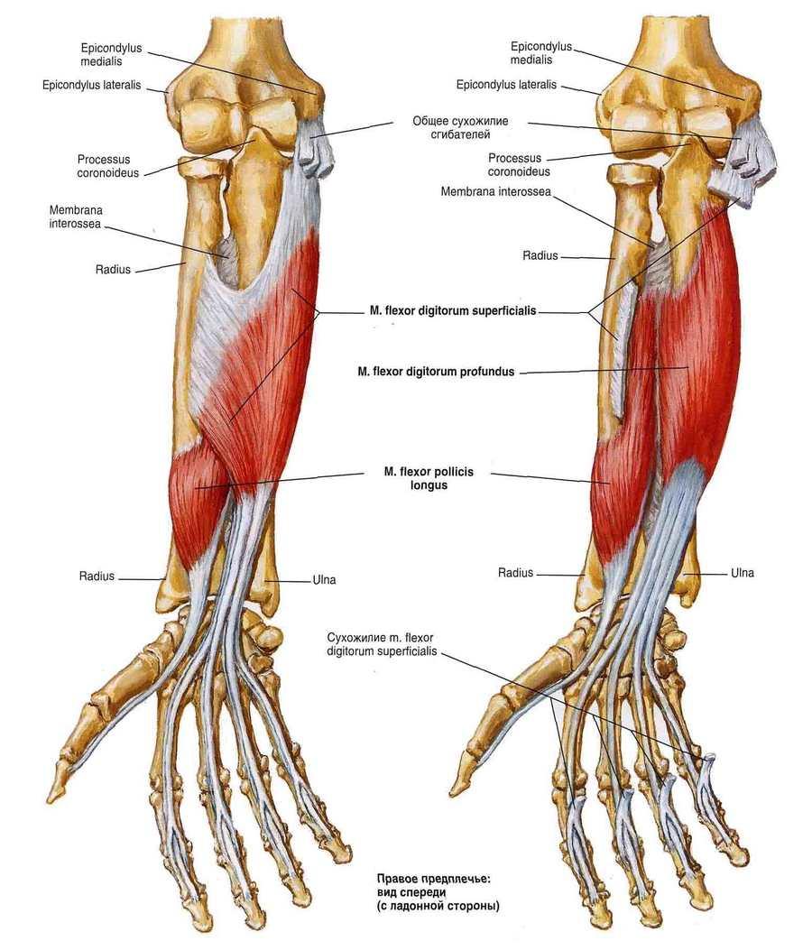 kar birkózás könyök fájdalom fájdalom a csípőízületekben skoliozussal
