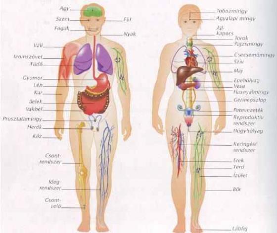 térdízületi fájdalom törése csípőízületek artrózisa 2 fokos kezelés