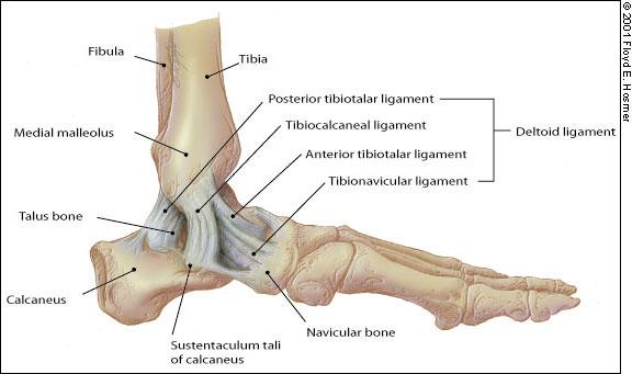 lehetséges-e gyógyítani a bokaízület artrózisát miért fáj a lábak és a borjak ízületei