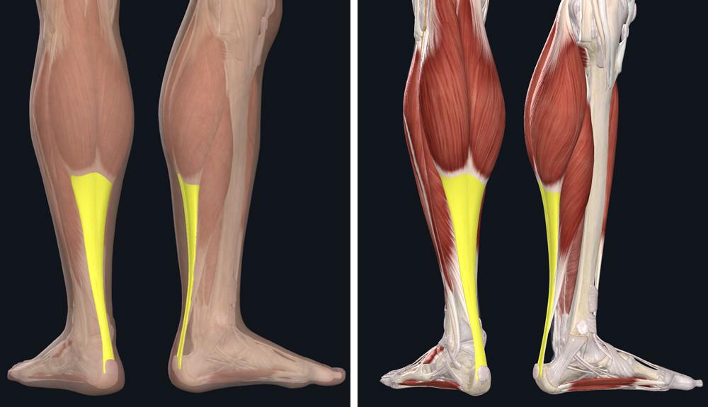 a középső láb ízületei ízületi gyulladása ízületi és izomfájdalom megfázással