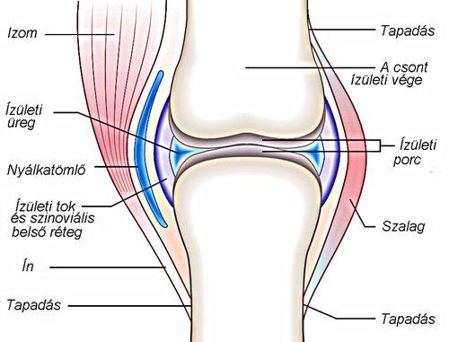 térdízületi fájdalom bőrpír
