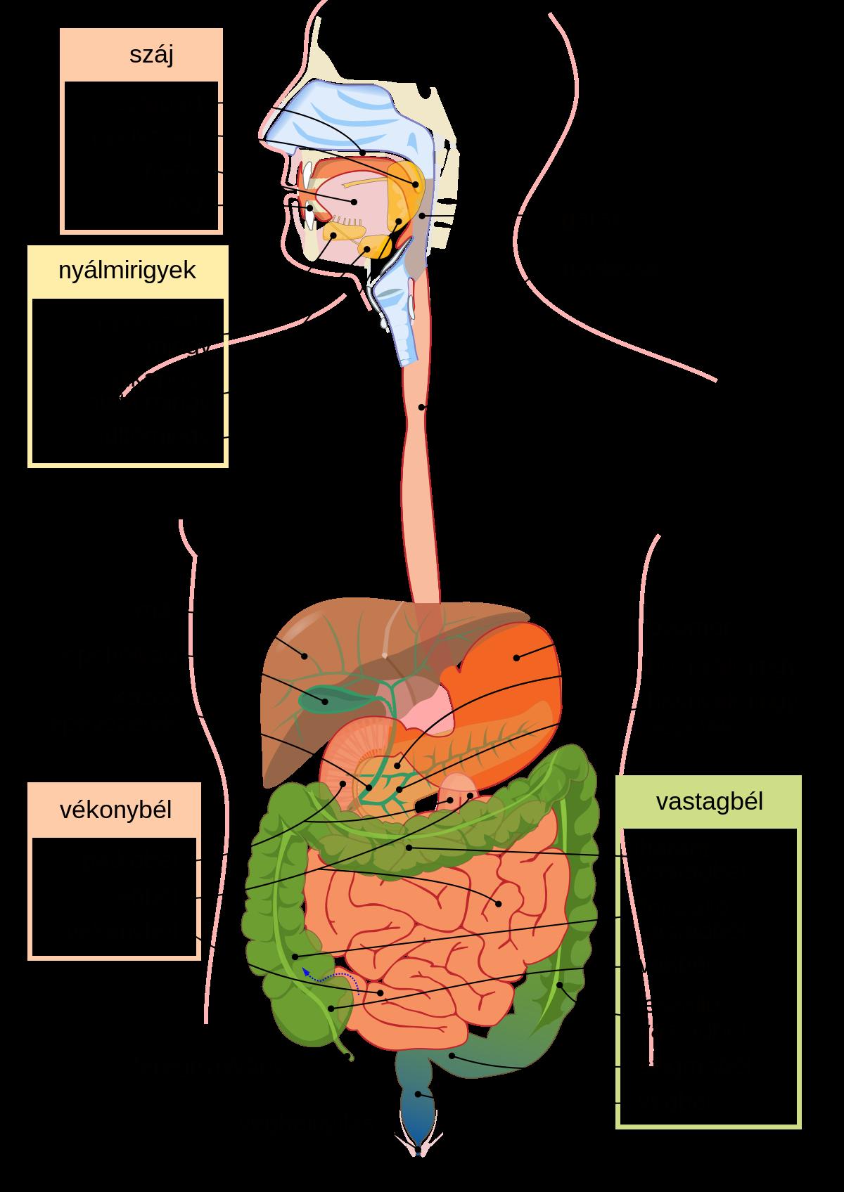 vállízület gyulladás tünetei fáj a térdízület, mint enyhíti a fájdalmat