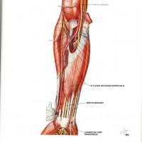 csukló ligamentum betegségek a térdízület osteoarthritis tünetei és torna kezelése