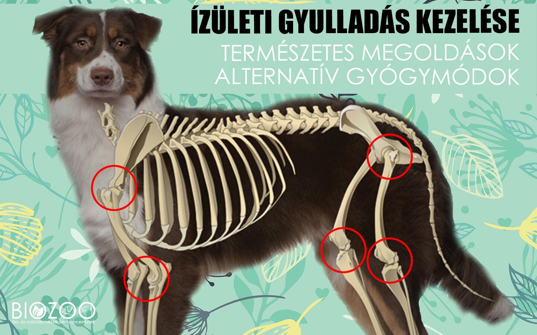 izületi fájdalom kezelése kutyáknál